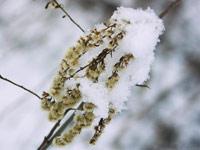 نگهداری از گیاهان در سرما