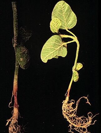 رشد اولین گیاه در کره ماه
