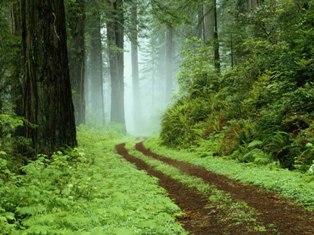 جنگل ها را چقدر می شناسیم ؟