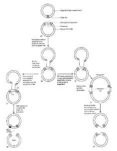 ژن های پرشی (ترانسپوزون)