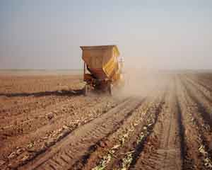 انواع روشهای کاشت نیشکر - آماده سازی زمین