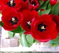 نمایشگاه گل کویکن هوف به روایت دانشجو