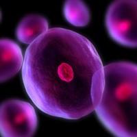نقش سلولهای چربی در کمک به حفاظت ما در برابر عفونت