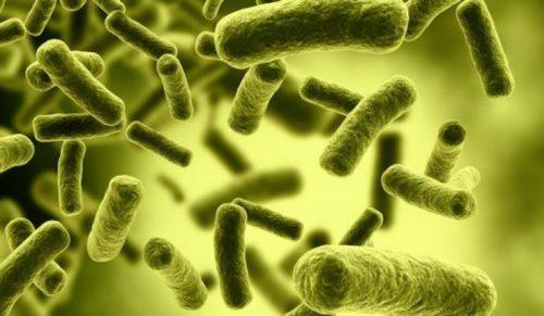 میکروب معده چیست