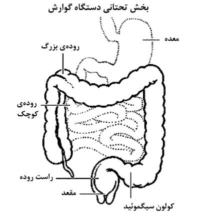 سیستم دفع ادرار بدن