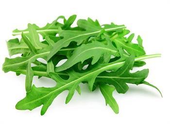 گیاه روکولا