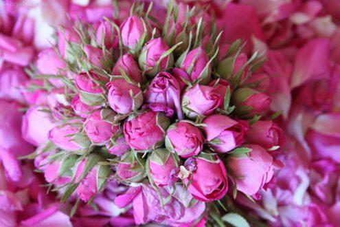 مزايا و خاصيت هاي گل محمدی