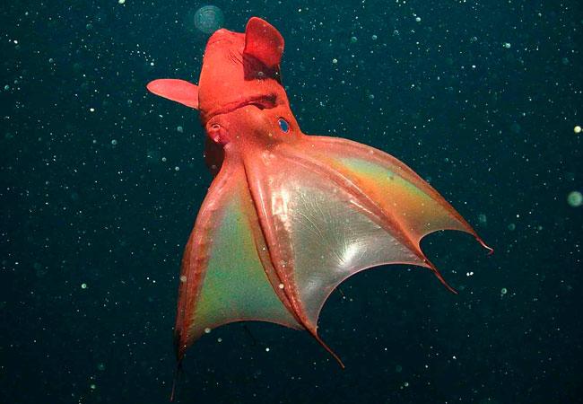 ماهی مرکب جهنمی