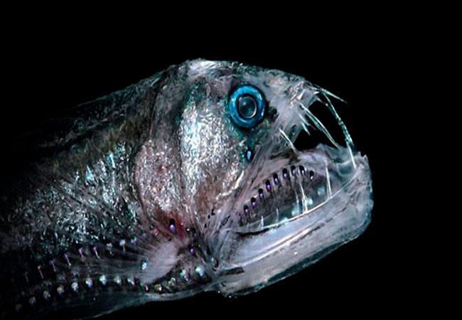 افعی ماهی