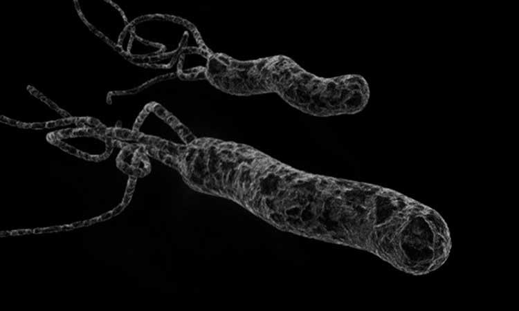 هلیکو باکتری