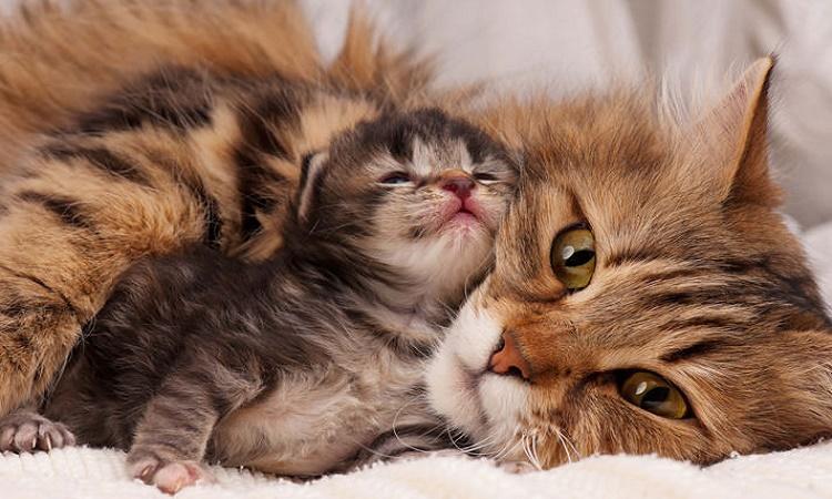 گربه حس بینایی قوی دارد