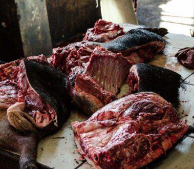 خواص درمانی گوشت گراز