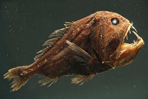 نام ماهی های عجیب دریایی مثل قلابچه ماهی
