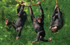 هوش جمعی حیوانات