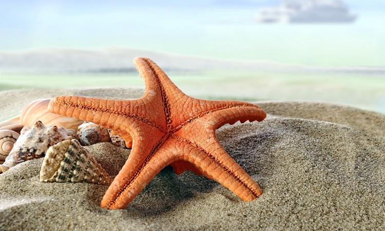 همه چیز درباره ستاره دریایی