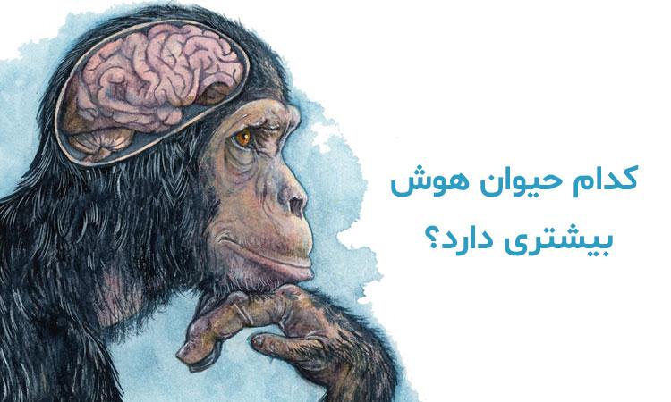 کدام حیوان مغز ندارد