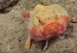 نام ماهی های عجیب دریایی