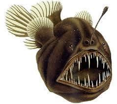 ماهی های عجیب دریایی