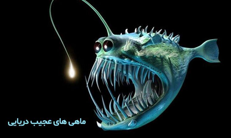 ماهی های عجیب دریایی و قلابچه ماهی